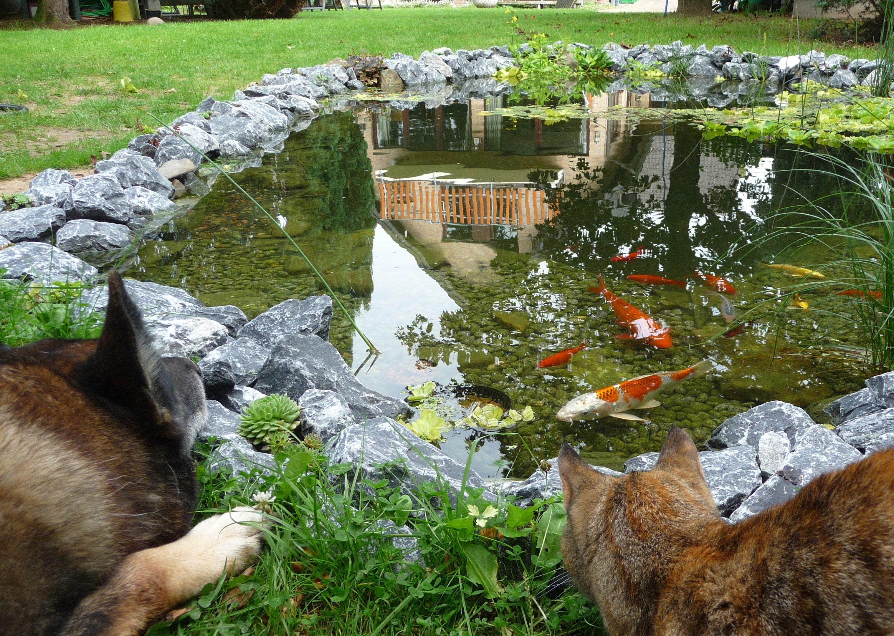 Nieuwe vijver maken kralenkwarts blog for Vissen vijver