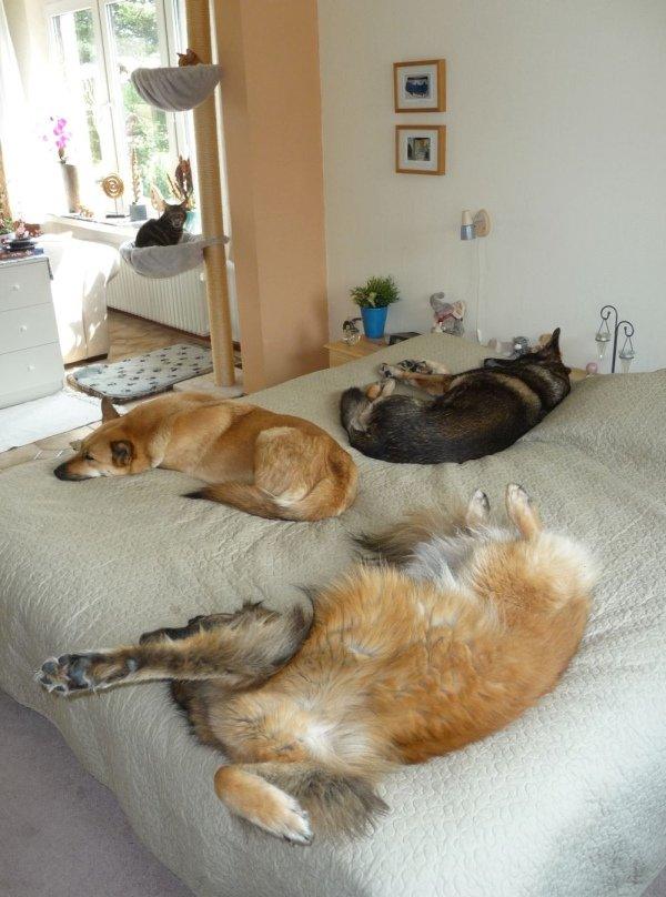 multi-huisdier