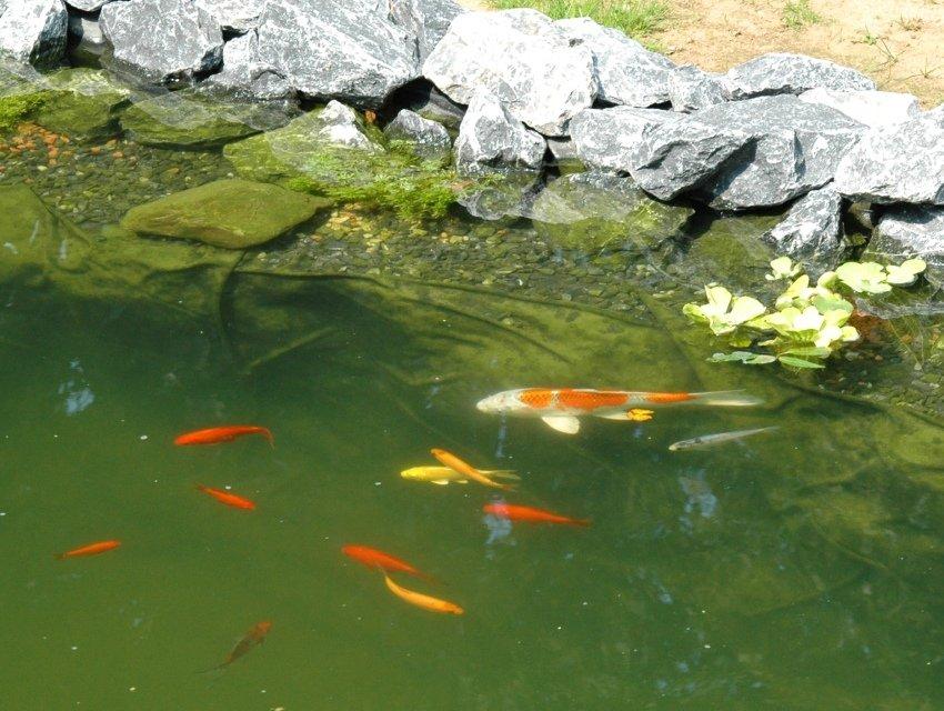 fische fred