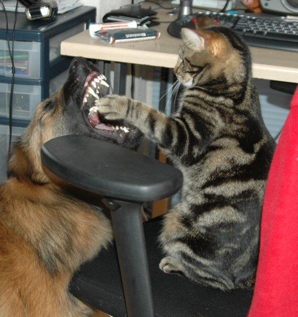 vechten-tanden