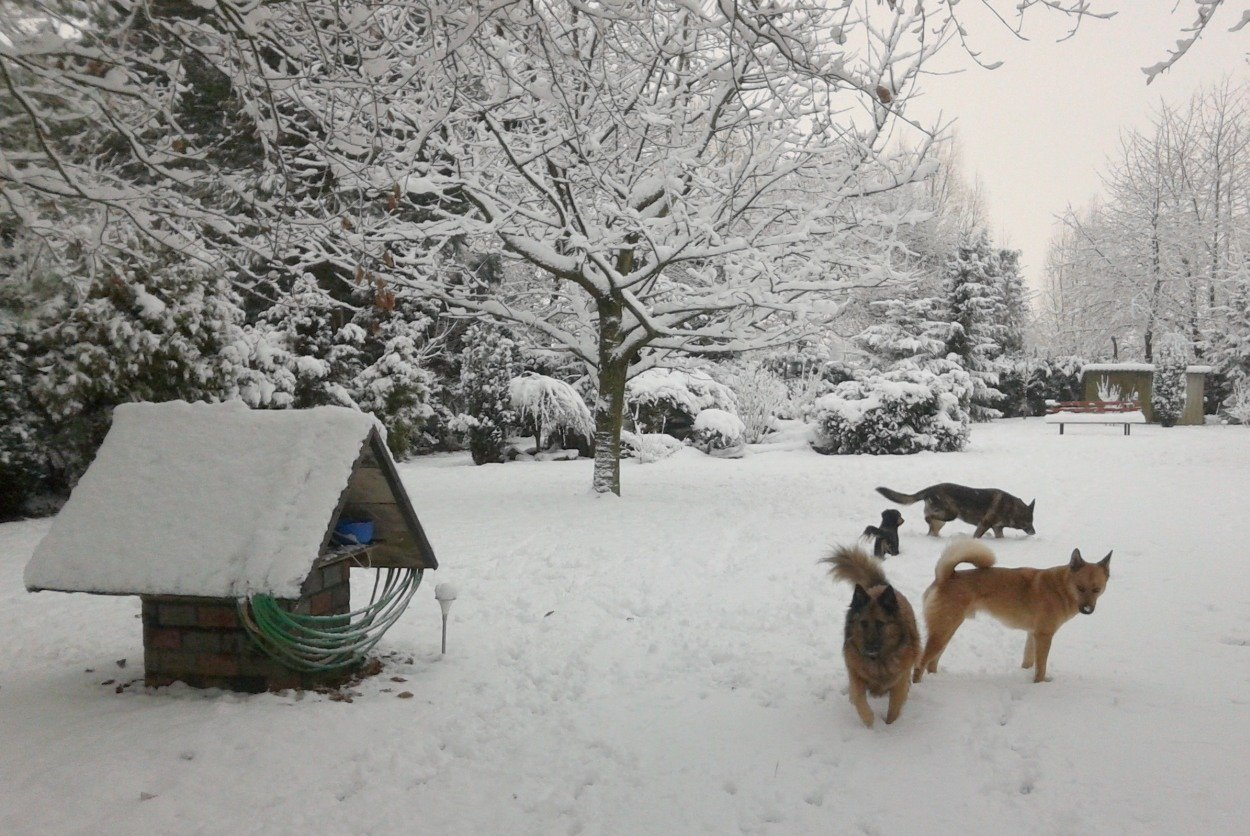 tuinfoto's winter